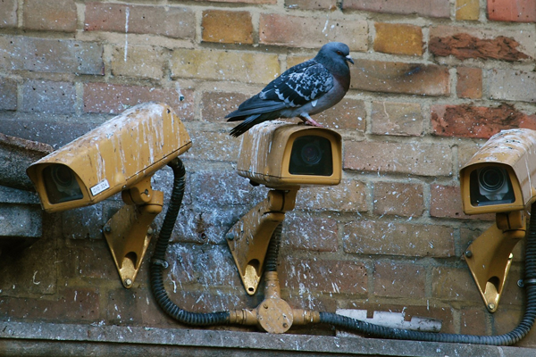 Bird-dropping-removal-somerset