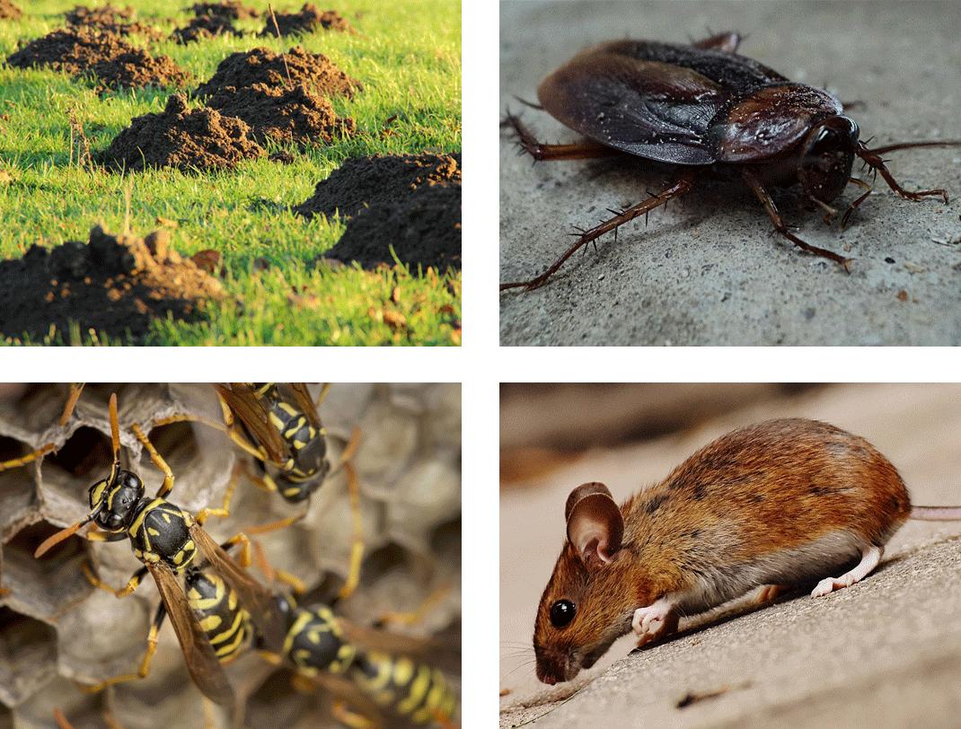 Pest Control South West